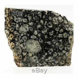 Diorite Orbiculaire. 1015.2 ct. Corse, France. Ultra rare